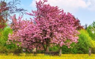 Beautiful-Spring